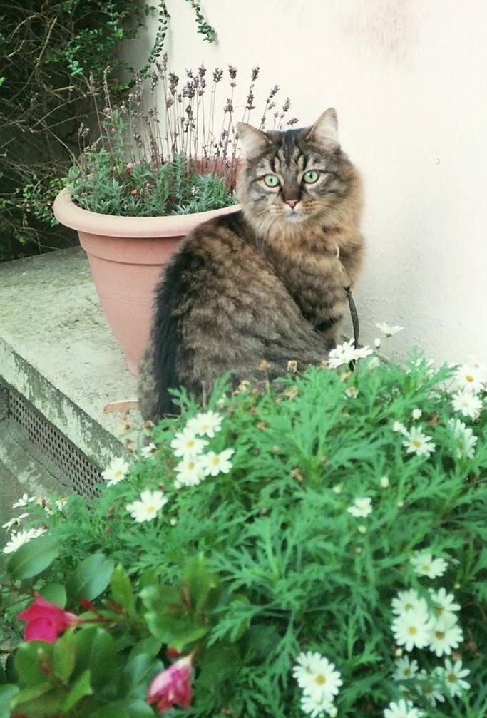 chat qui refuse d'aller dans sa litière, miaulements