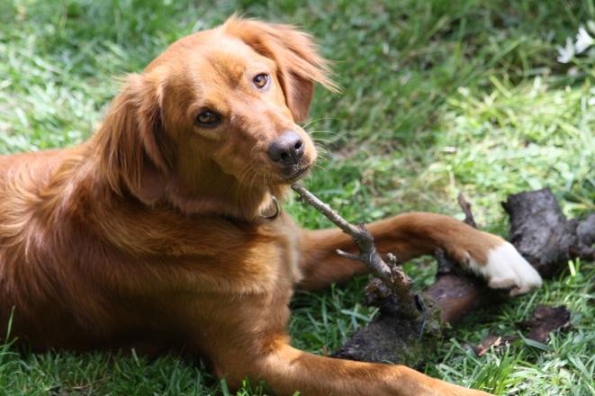 education canine seine et marne educateur canin et