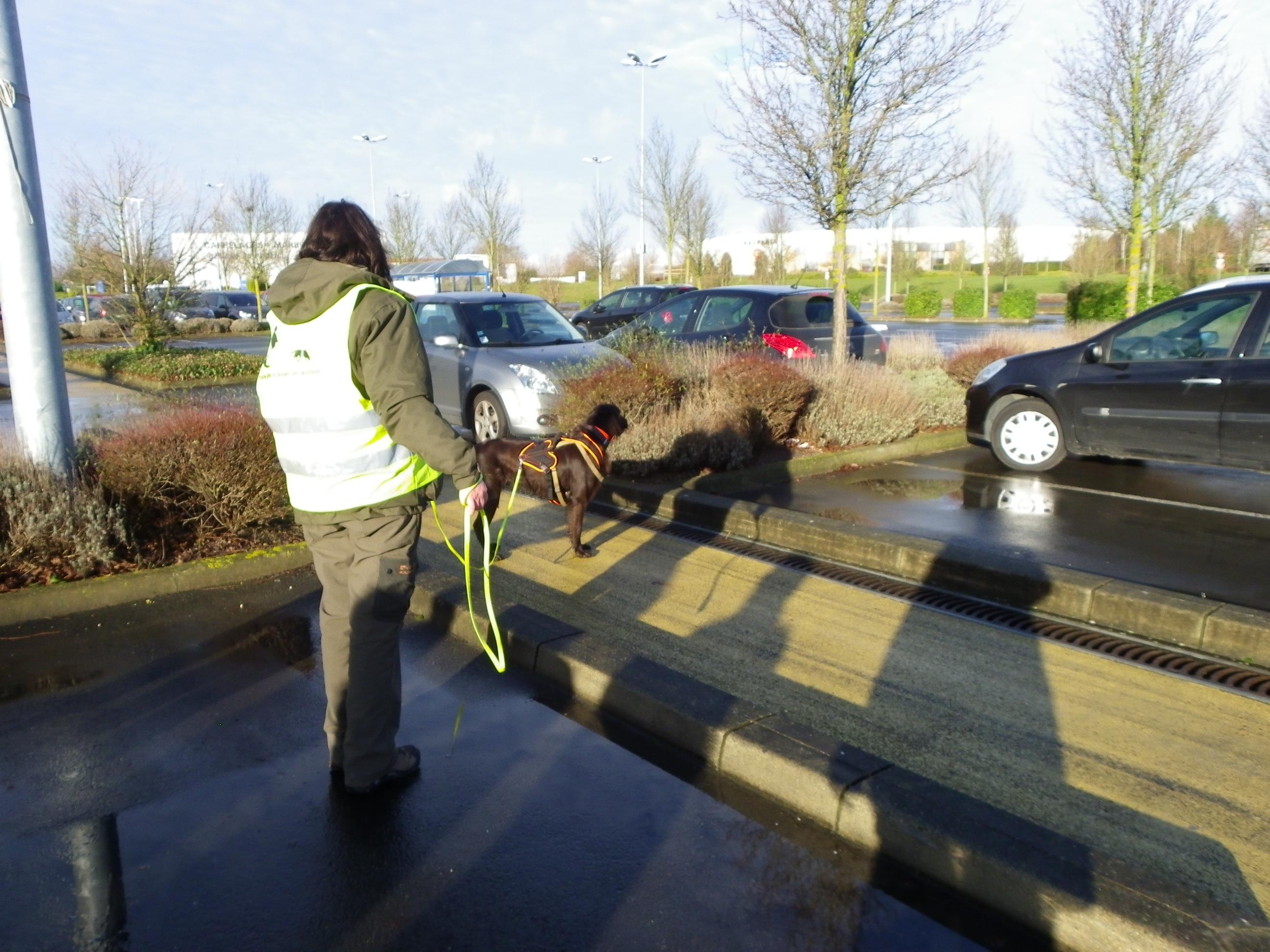 Activit s pour le chien les diff rents besoins - Jeux de chiens a s occuper ...